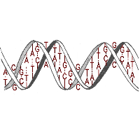 DNA is Binary